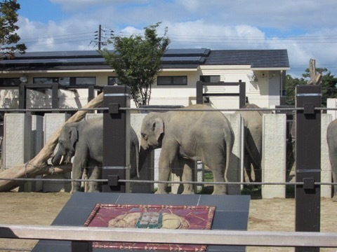 京都市立動物園は幼児連れに超お勧めでした!